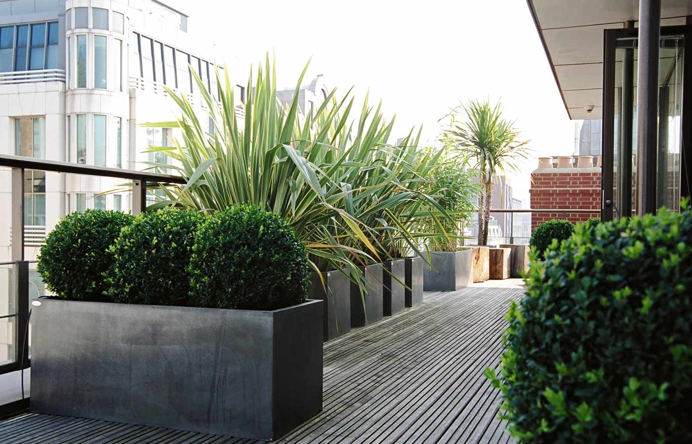 Architectural planting on the roof garden