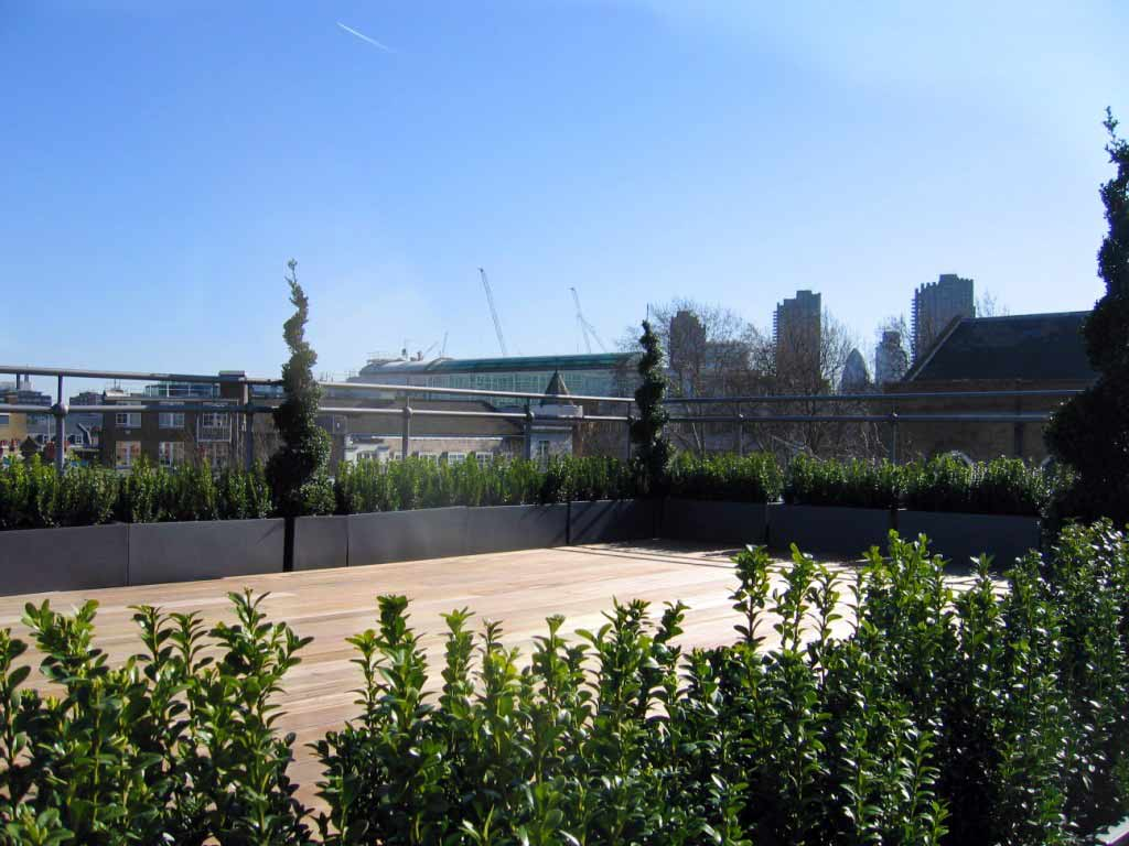 Box hedging at the perimeter of roof terrace