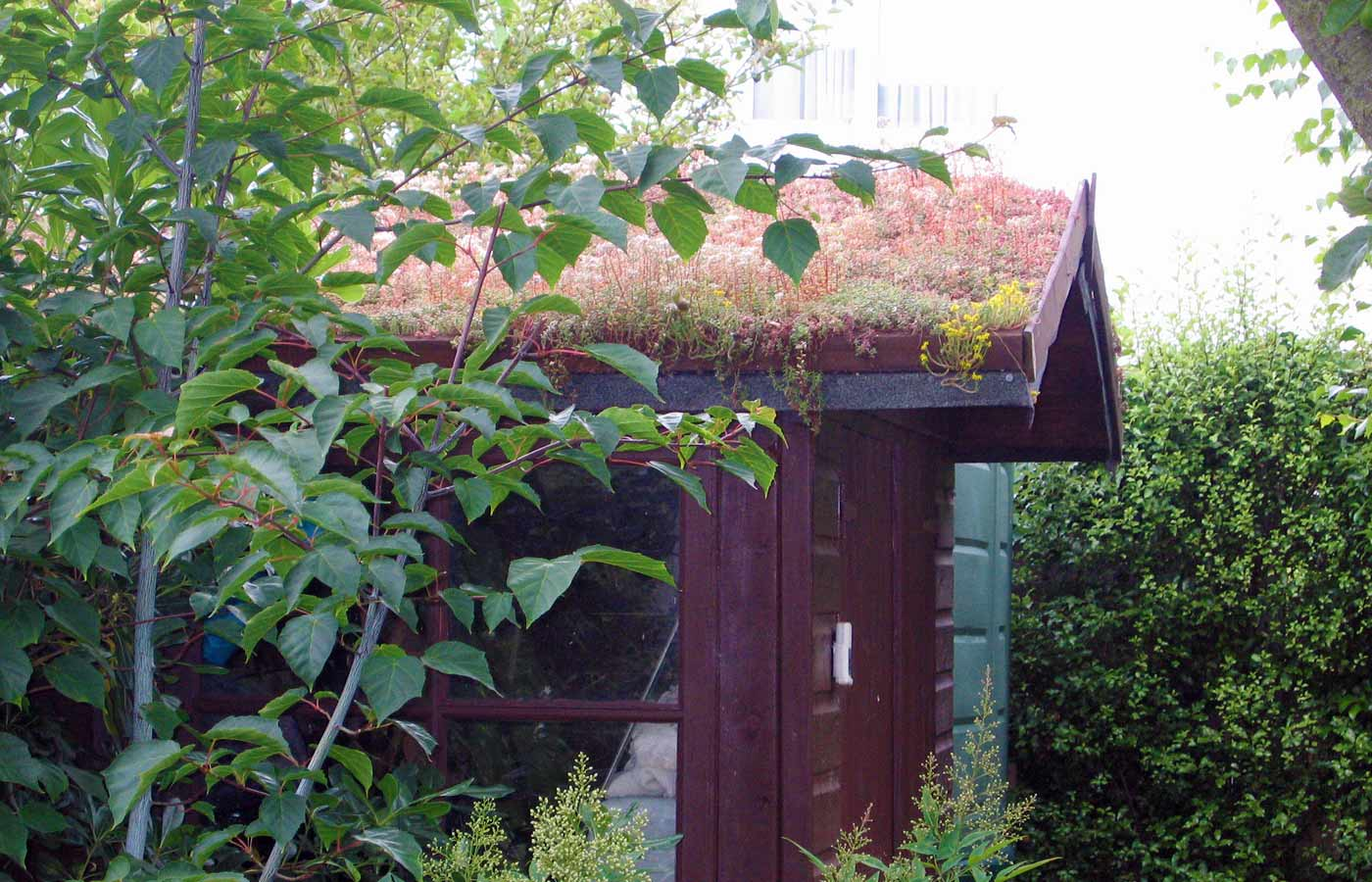 Shed with planted roof