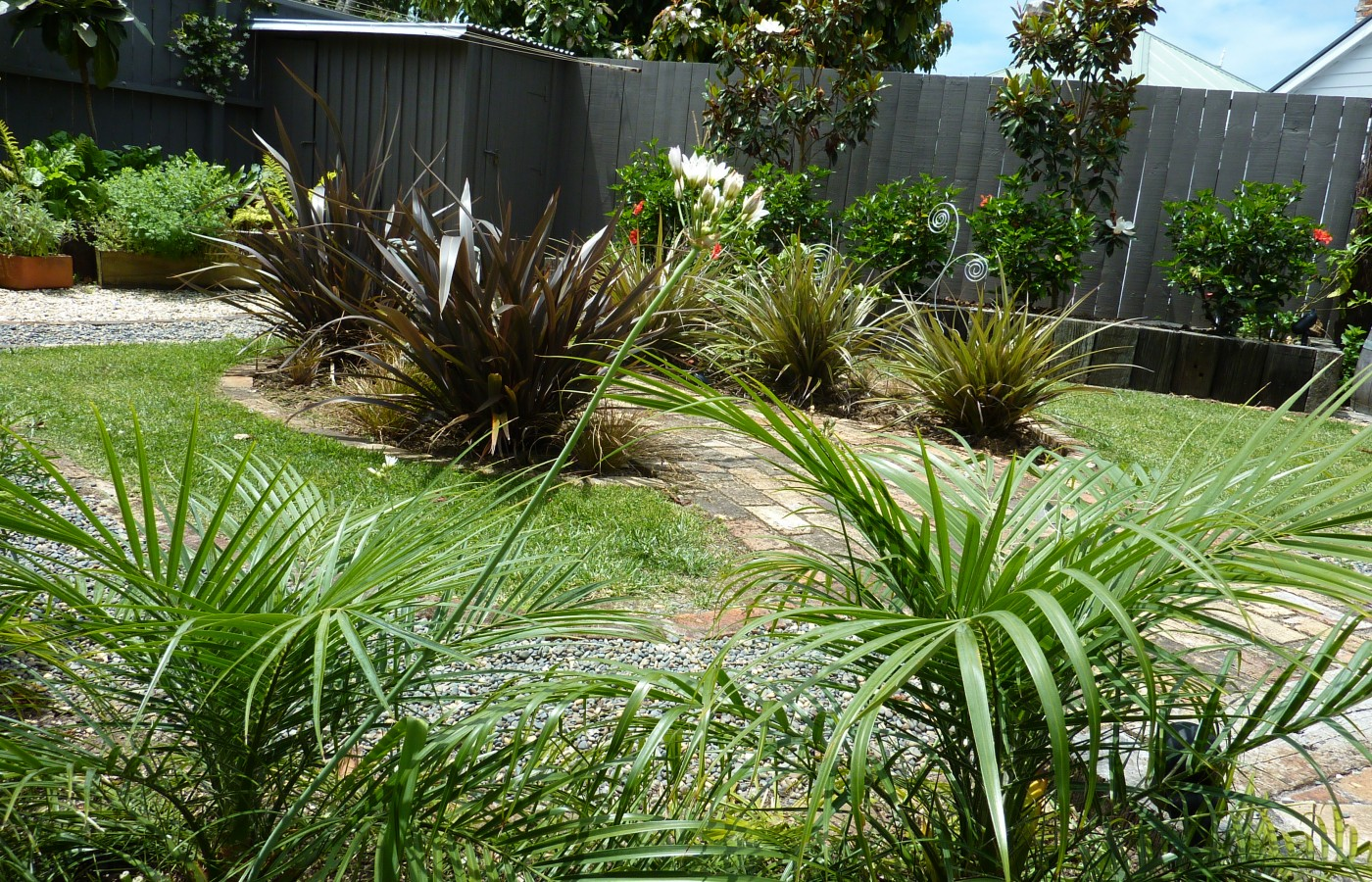 Palms, phormiums, astelia and carex