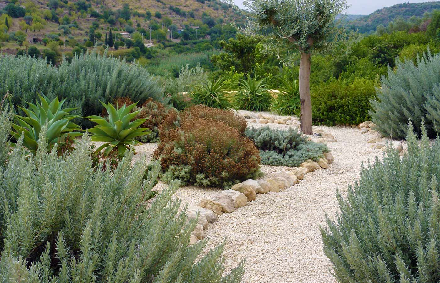 Lavender and santolina in Sicily garden