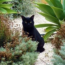 Mediterranean garden visitor