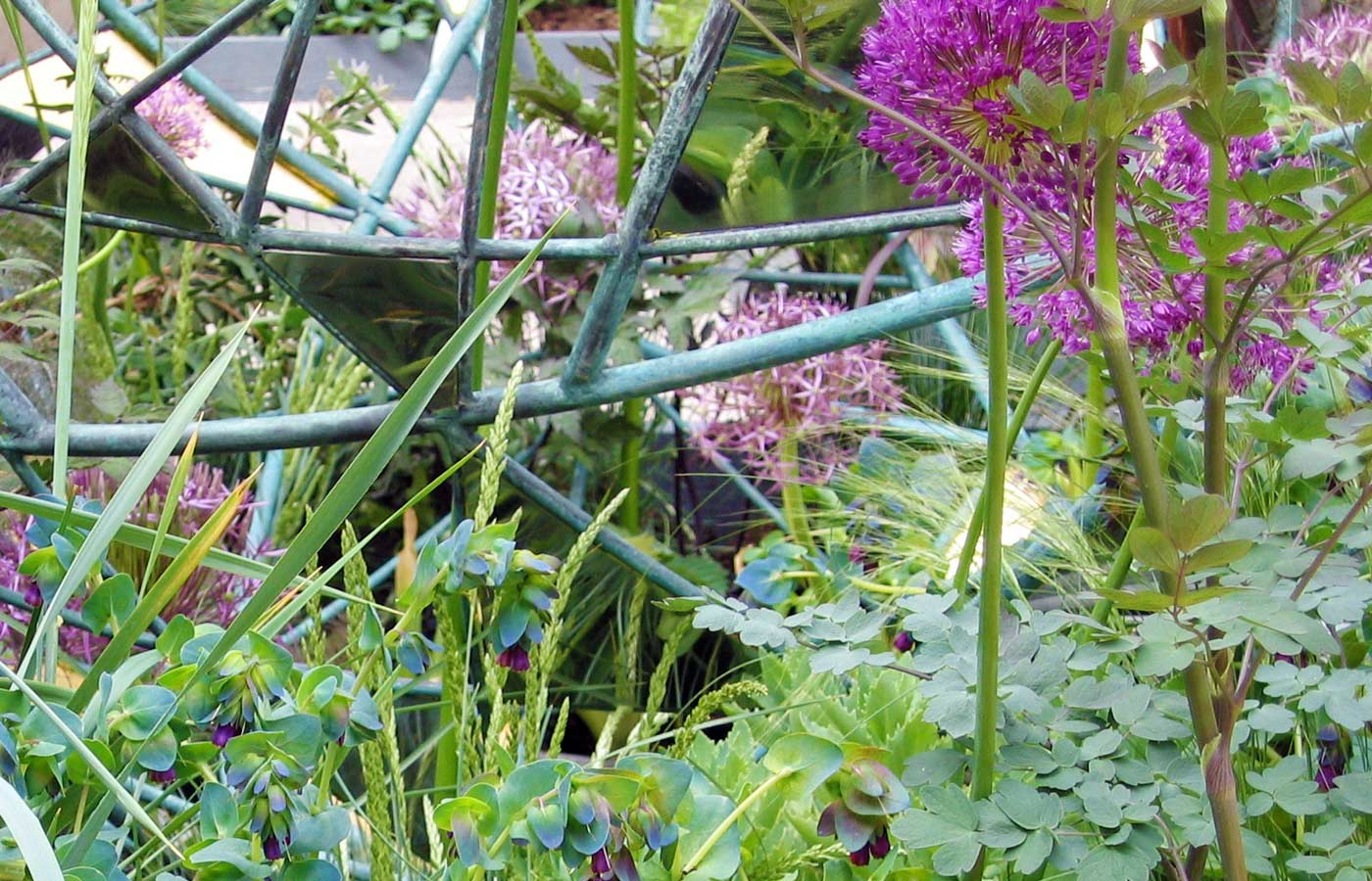 Cerinthe thalictrum alliums grasses intertwine with the Matrix garden sculpture